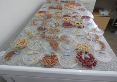 Seeds prepared for germination tests
