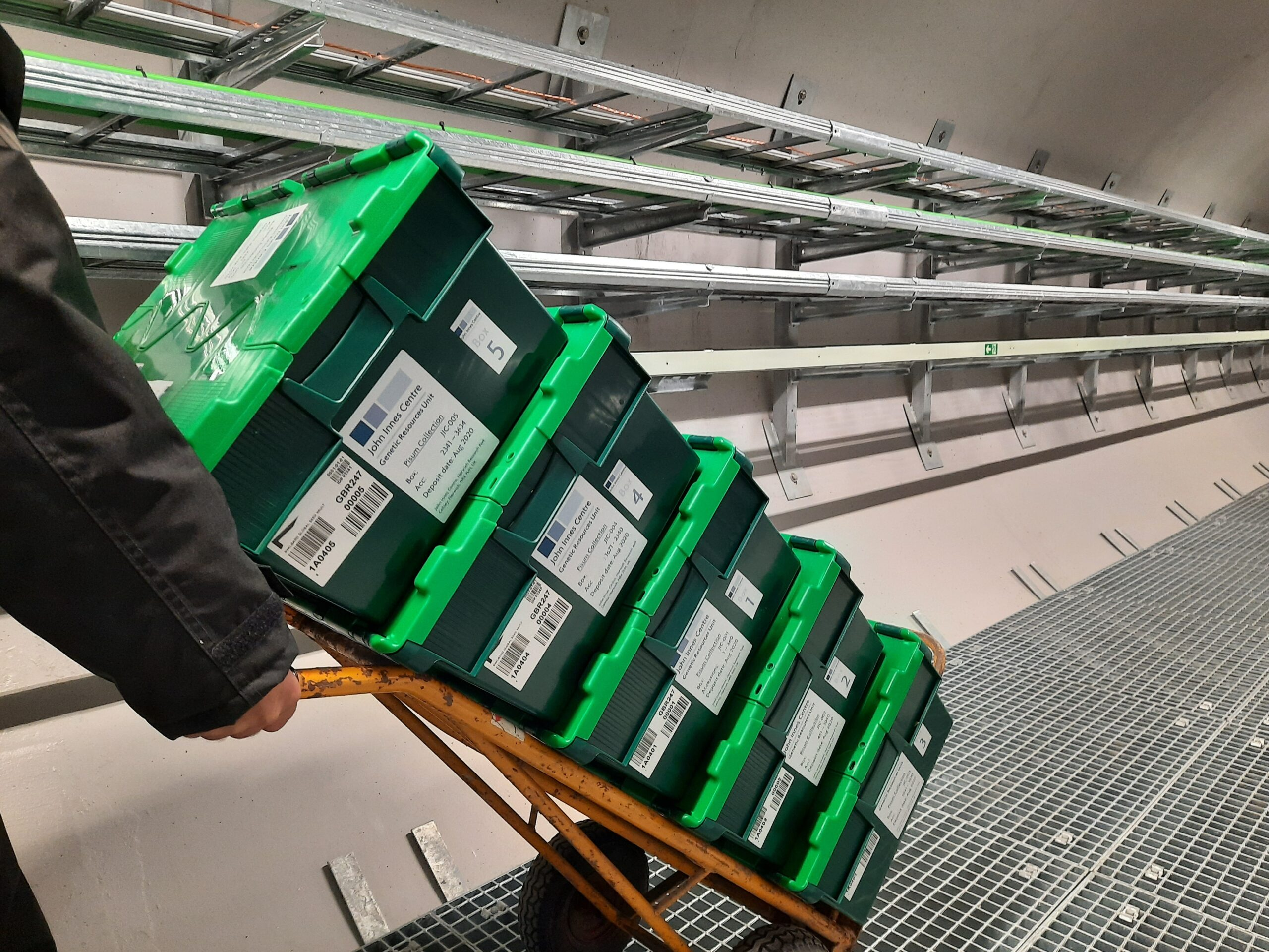 Nearly 3,000 pea samples from UK deposited in the Seed Vault