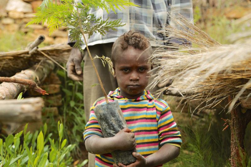 Ethiopian boy planting tree