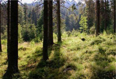 KLD fotostil, natur motiv eksempel 3, skog og gress
